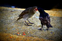 Birds sharing