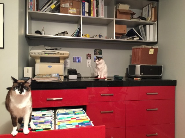 Filing cats - talented